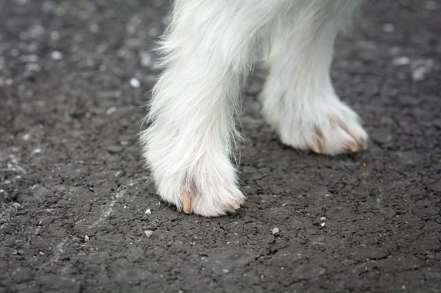 Dogs feet