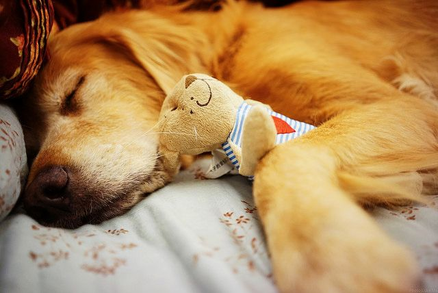 Why your dog is sleeping more than usual