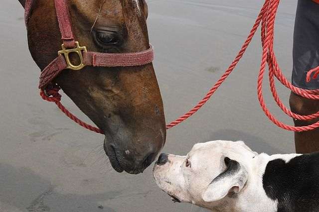 dogs communicate with other animals