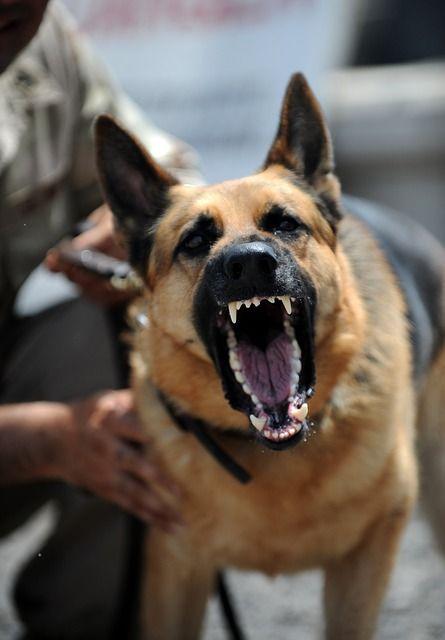 growling dog