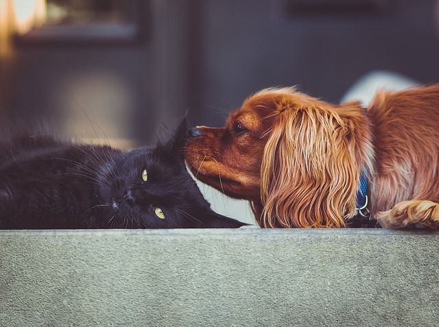 Why Do Dogs Hate Cats? – The Scientific Story!