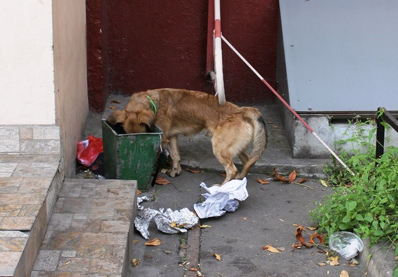 A Dog Eating Garbage