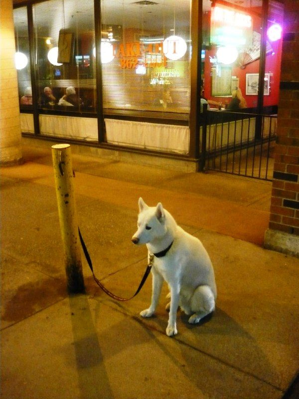 A Dog Tied With A Leash