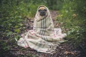 21 Common Dog Behavior Problems and Solutions