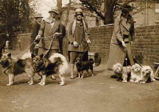 Keeshond at Holland Par Dog Show, c. 1923