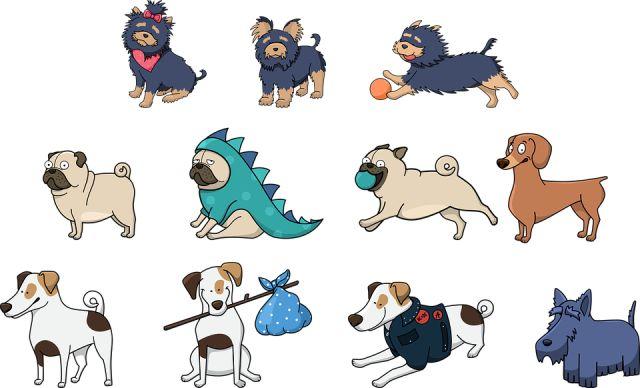 Characteristics of pugs