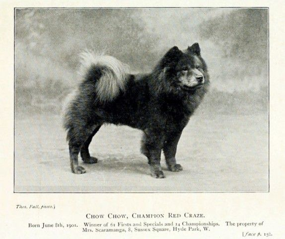 Chow Chow- history