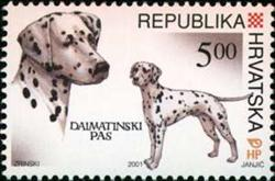 Dalmatian on Croatian Stamp