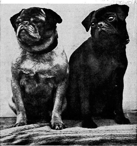 History of pug