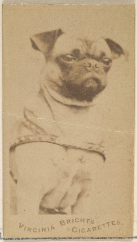 History of the pug