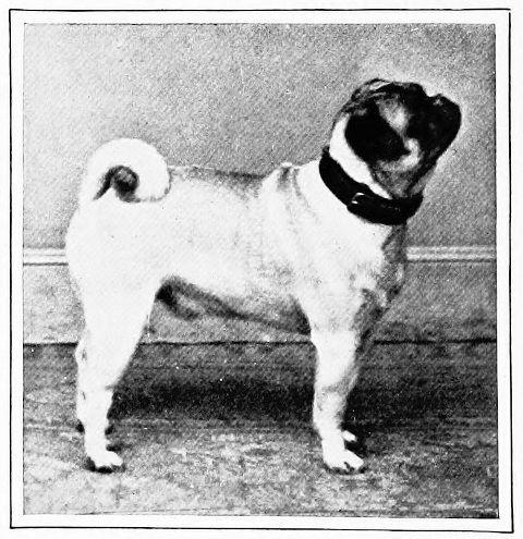 pug-history