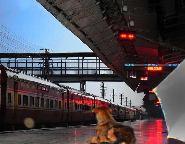 A Dog Sitting On A Railway Platform