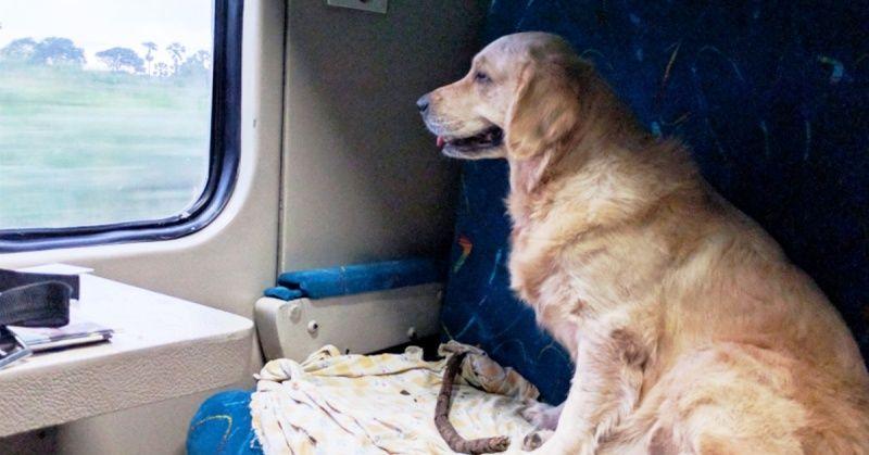 A Dog Sitting Inside An Indian Train