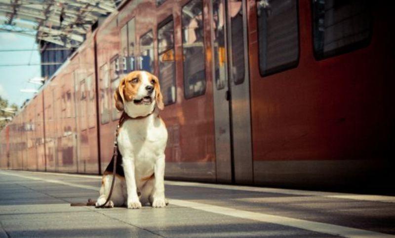 A Dog Sitting Outside A Train