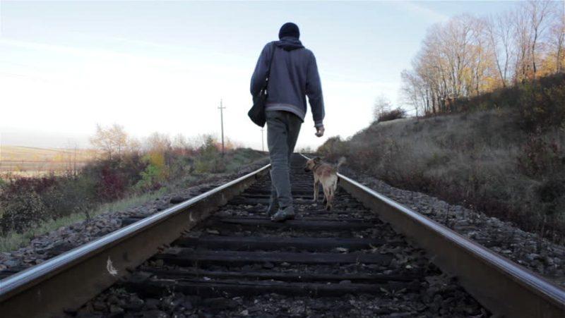 A Dog Walking On A Railway Track