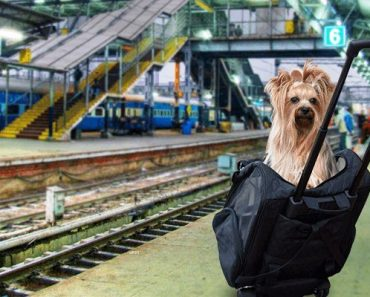 Travel With Your Pets In The Indian Railways