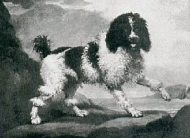 A Painting of a Traditional Poodle