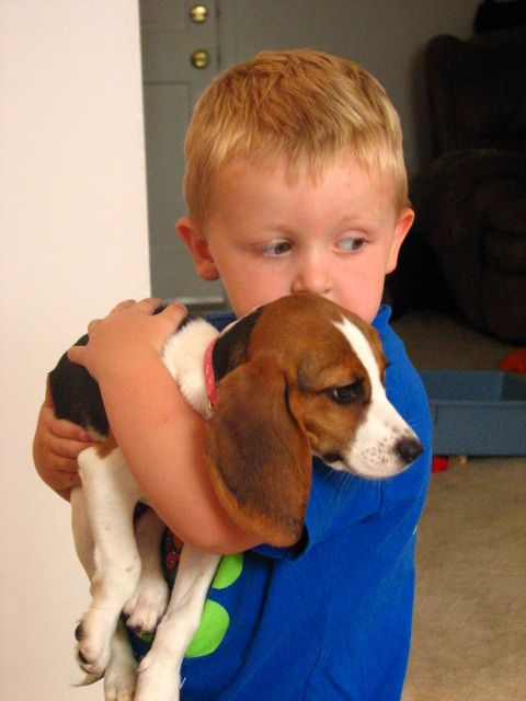 Beagle and kid-compressed
