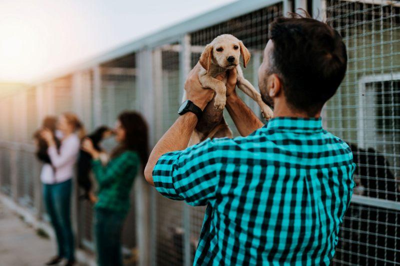 Dog Adoption guide cover