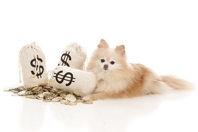 Dog finances adoption