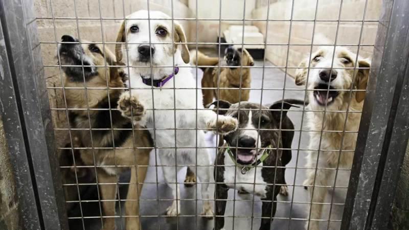Dog shelter adoption