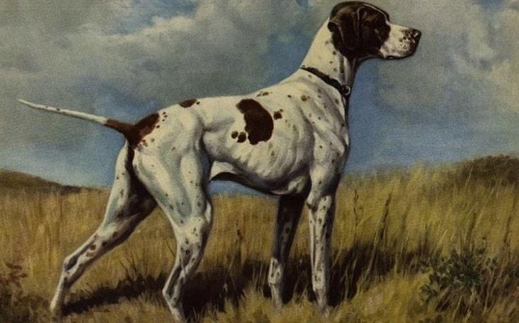Braque du Puy extinct