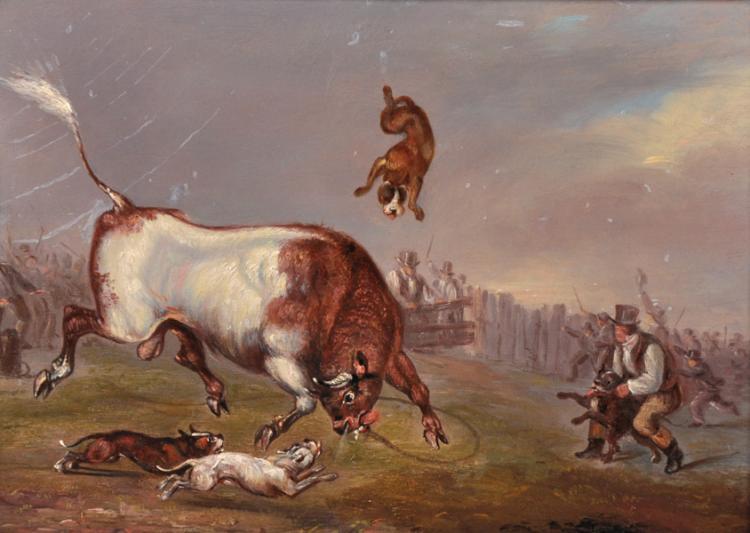Bullbaiting bulldog