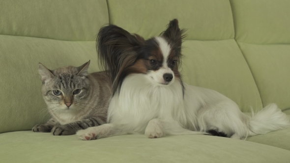 Cat and paillon