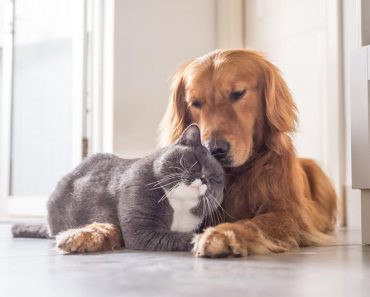 9 Dog Breeds That Are Good With Cats
