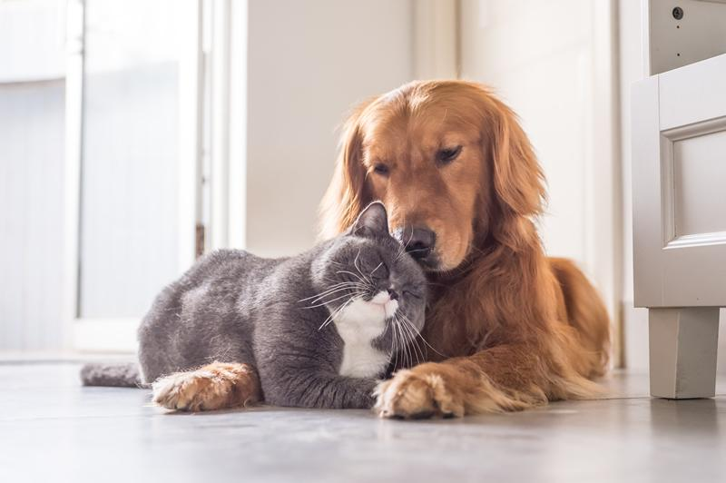 Dog and cat cover