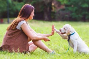 6 Dog Breeds That Are Easy To Train