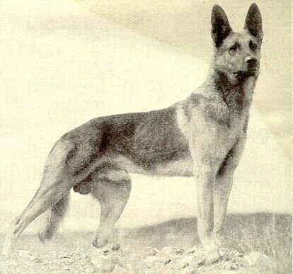 Early GSD