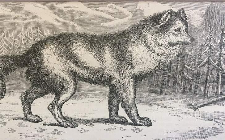 Hare-Indian dog extinct