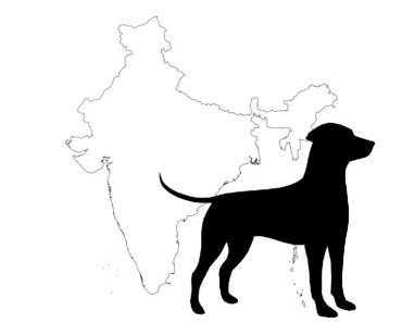 5 Dog Breeds That Are Banned in India