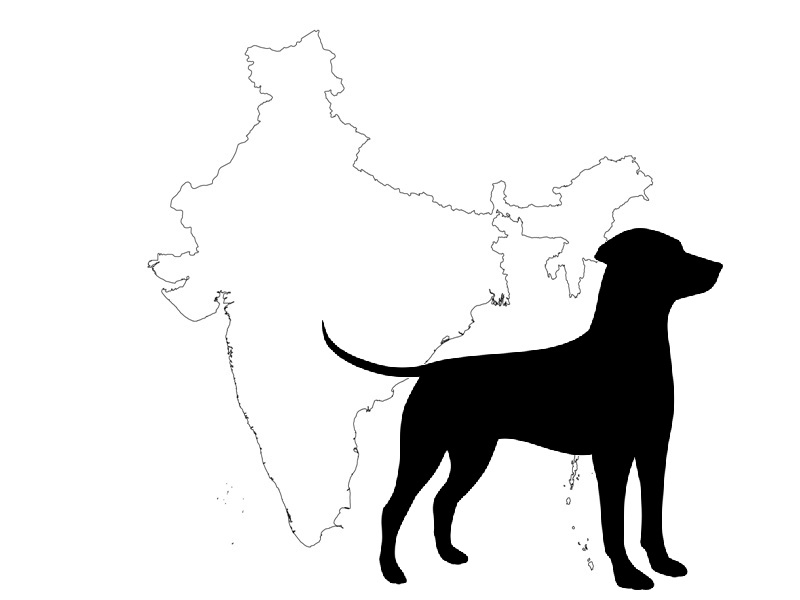 Indian Banned dogs cover