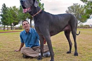 Top 10 Largest Dog Breeds in the World