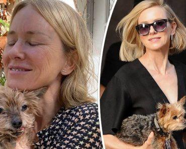 List of Naomi Watts' Dogs