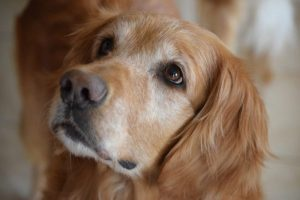 11 Dog Breeds That Are Not Aggressive