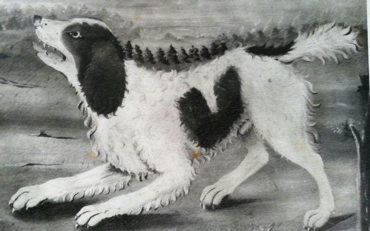 Norfolk Spaniel extinct