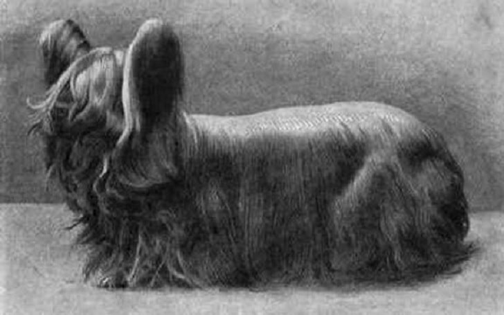 Paisley Terrier extinct