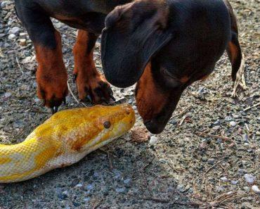 8 Dog Breeds That Kill Snakes