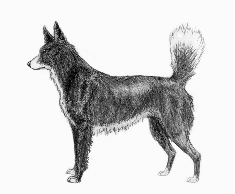 Tahltan Bear Dog extinct