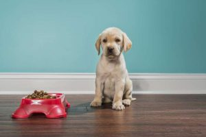 11 Worst Dog Food Brands to Avoid